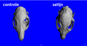 schedel-dorsalview